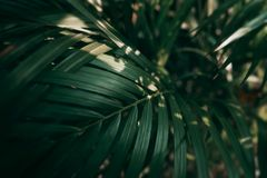 Blurred Tropical green leaf in dark tone.  royalty free stock photo