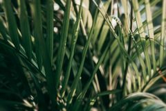 Blurred Tropical green leaf in dark tone.  royalty free stock image