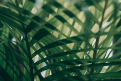 Blurred tropical green leaf outside the window. Blurred tropical green leaf outside the window, Dark tone royalty free stock image