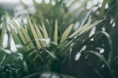 Blurred tropical green leaf outside the window. Blurred tropical green leaf outside the window, Dark tone stock photos