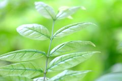 Blurred tropical plant leaves with sunlight for background backdrop royalty free stock photo