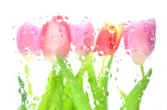 Blurred tulips Stock Image