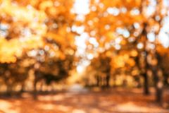 Blurred view of trees with bright leaves in park. stock photo
