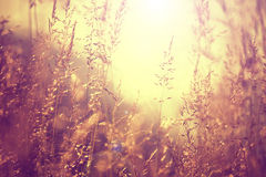 Blurred vintage color meadow Stock Photos