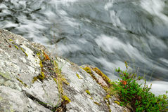 Blurred water flowing past mossy stone Royalty Free Stock Photo