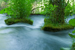 Blurred water flowing between trees Royalty Free Stock Image
