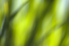Blurred water plants Stock Photo