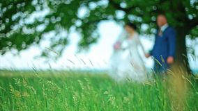 Blurred Wedding Couple Walk in the Forest. Green grass stock footage