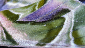 Blurred Wing of Butterfly Camouflage Stock Photos
