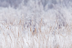 Blurred winter background, dry grass snowflakes Stock Photography