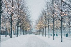 Blurred winter tree alley with falling snow and shining garlands in twilight. royalty free stock photography