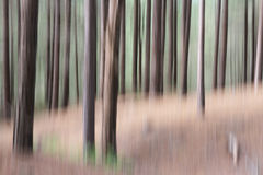 Blurred woodland. Pine tree woodland with shapes and textures, natural  blurred abstract background effect Royalty Free Stock Image