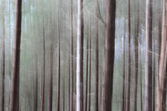 Blurred woodland. Pine tree woodland with shapes and textures, natural  blurred abstract background effect Royalty Free Stock Photos