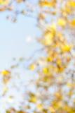 Blurred yellow autumn foliage. With bokeh Royalty Free Stock Photo