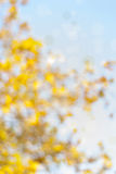 Blurred yellow autumn foliage. With bokeh Royalty Free Stock Image