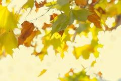 Blurred yellow autumn foliage. With bokeh Stock Photos