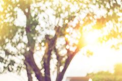 Blurred yellow light from under tree in sunset stock photos