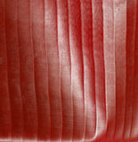 blurredstripey Royaltyfri Fotografi