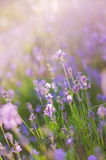 Blurring background lavender sunset. Crimean beauty at sunset.  Royalty Free Stock Photos