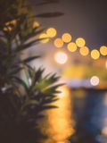 Blurring plant with bokeh Royalty Free Stock Image