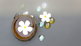 Blurring Spa treatment with Plumeria flower water in coconut she Stock Photography