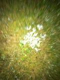 blurry fotografia de stock royalty free