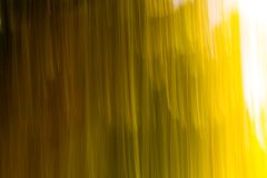 Blurry abstract background of green summer forest Stock Photography