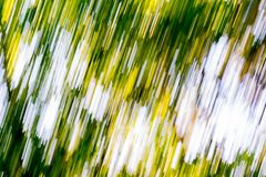 Blurry abstract background of green summer forest Stock Images