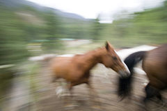 Blurry Action Royalty Free Stock Image
