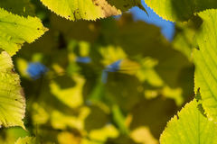 Blurry background with autumn leaves Royalty Free Stock Photo