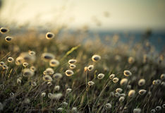 Blurry Background with Beach Grass. On a sunny day in Brittany France Stock Image