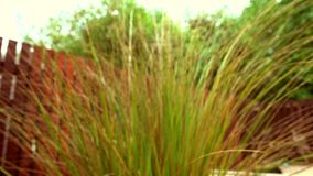 Blurry background of grass and trees. Blowing in the wind stock video footage
