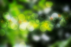 Blurry bokeh background. Abstract green blurry bokeh background royalty free illustration