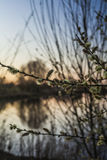 Blurry branches at sunset Royalty Free Stock Images