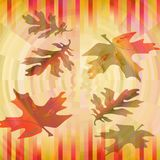 Blurry colorful leaves on striped background in vibrant autumn colors, maple and oak leaf shapes Stock Photos