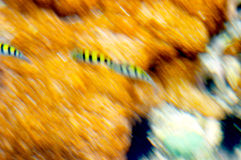 Blurry coral reef Royalty Free Stock Photos