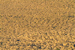 Blurry cracked earth near drying water on twilight use for back Stock Images