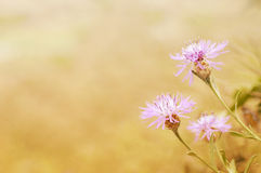 Blurry Flower for Background Royalty Free Stock Images