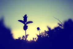Blurry flower silhouettes Stock Image