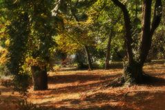 Blurry forest detail Royalty Free Stock Images