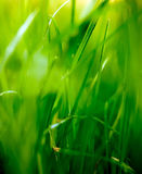 Blurry Grass Royalty Free Stock Photo
