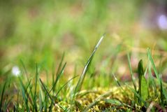 Blurry grass background Stock Photos