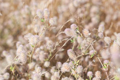Blurry grass for Background Stock Photos