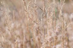 Blurry grass for Background Royalty Free Stock Photography
