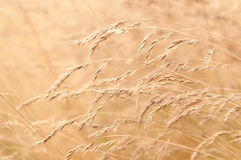 Blurry grass for Background Royalty Free Stock Images