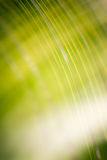 Blurry green abstract lines Stock Image