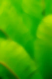 Blurry green backgrounds Stock Image