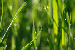 Blurry green grass with water droplet . Royalty Free Stock Photography