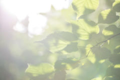 Blurry Green Leaves Illuminated by Sunlight Stock Photos
