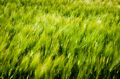 Blurry  green nature background Royalty Free Stock Images